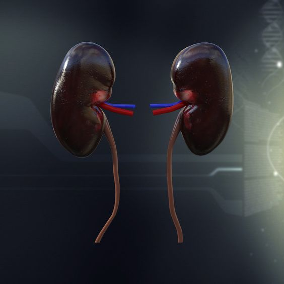 Kidney Stone Diet